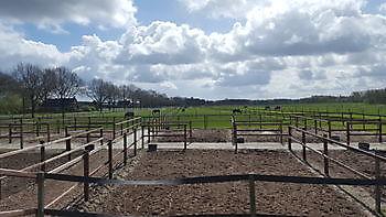 Paarden paddock en weiland Stal Esther Midwolda